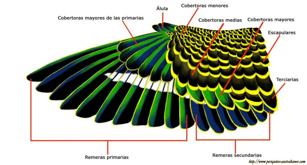 plumas remeras