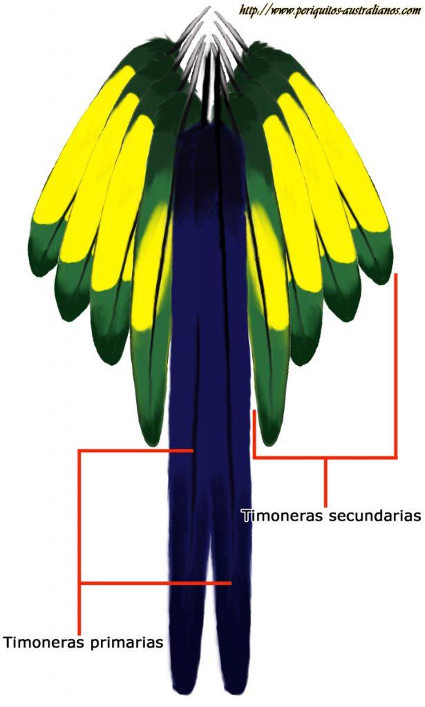 plumas timoneras