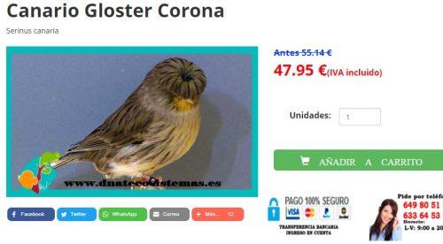 Comprar canario gloster corona en dnatecosistemas.es