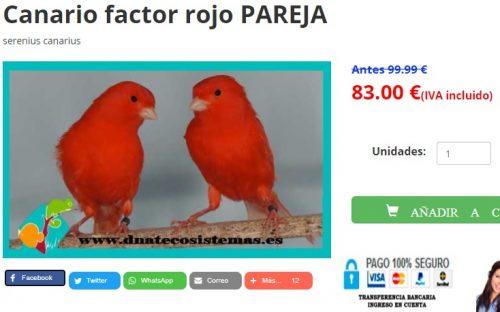 Comprar pareja canario factor rojo en dnatecosistemas.es