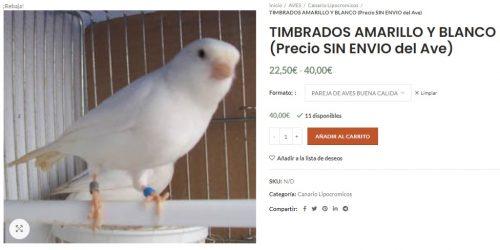 comprar canario timbrado español en latiendadelcanario.com